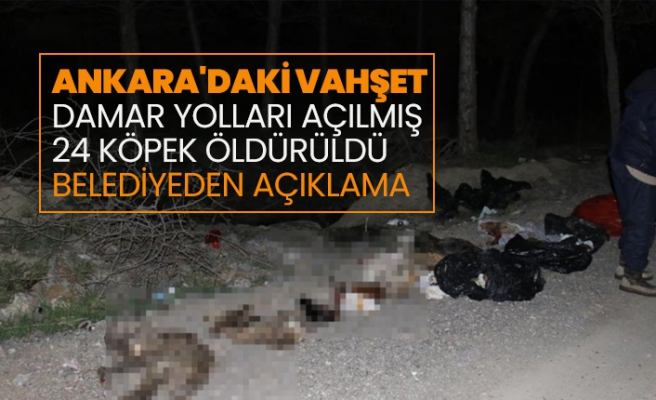 Çankaya'da 24 Sokak Köpeği Katliamı